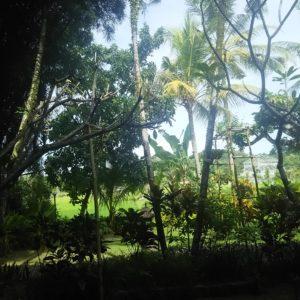 泣く泣くバリ島旅行をキャンセルしました。火山噴火のリスクヘッジ